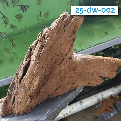 003-driftwood-wattley-discus
