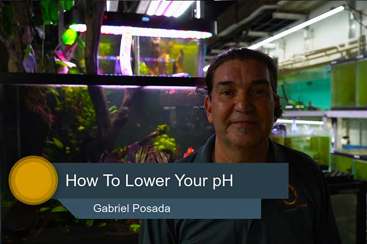 How to Lower Ph in Your Tropical Fish Tank