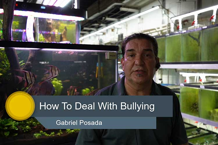 Discus Bullying and Aggression