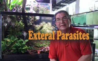 External Parasites And External Problems And Discus Medication