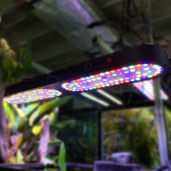 45-Inch-LED-System-For-Planted-Tank-wattley-discus